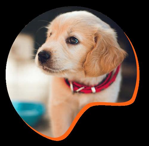 Formation eleveur canin et félin